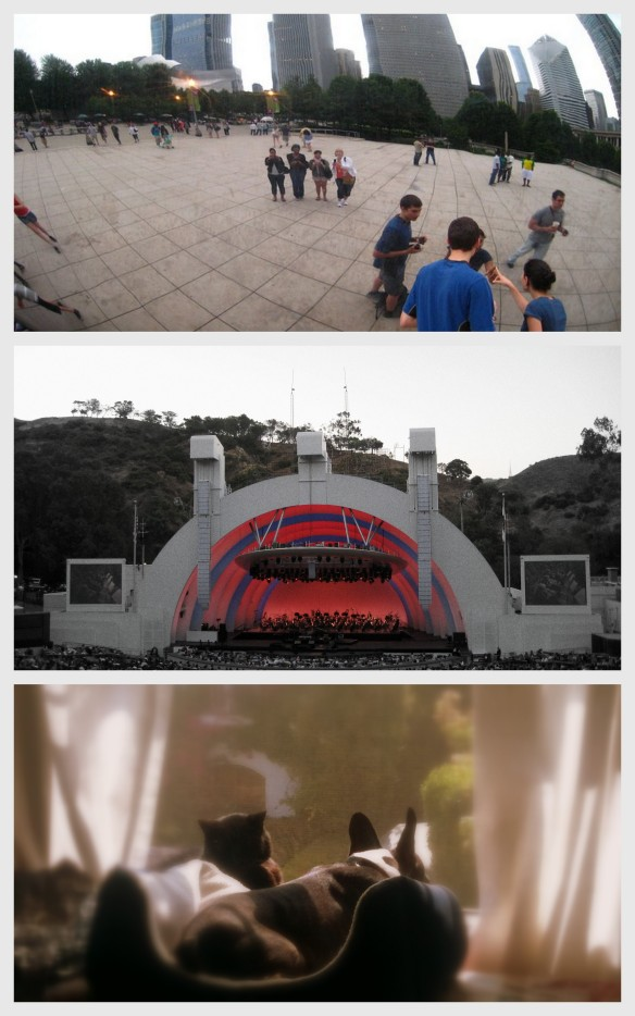chicago, chicago bean, hollywood bowl, summer, pets, cat, dog