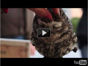 lovely owl video youtube