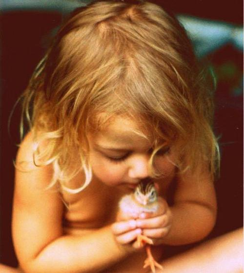 little girl holding baby chick precious fragile cute kids animals