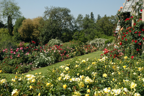 The Huntington, Huntington Botanical Gardens, rose garden, relaxation, staycation, vacation, southern california getaways, mothers little helper